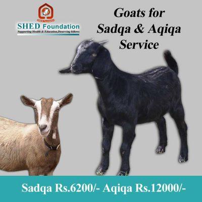 Sadqa---cost-Rs-6200-Aqiqa-